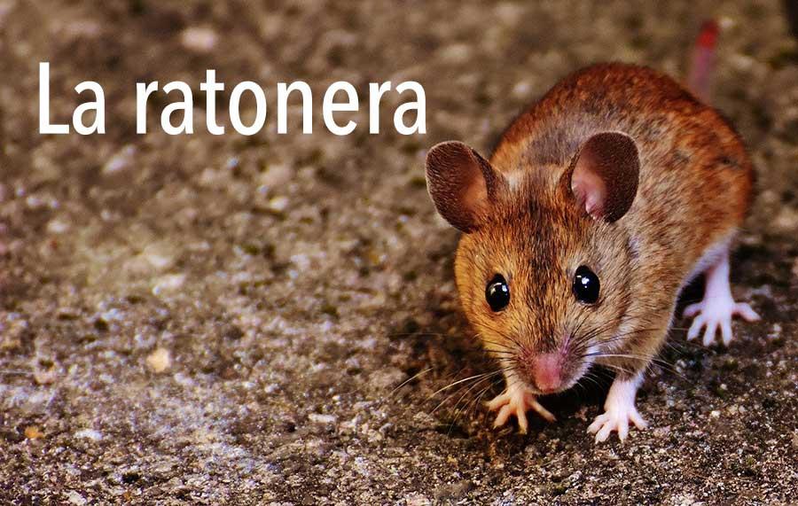 La ratonera | Cuentos