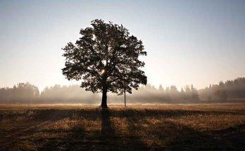 Tener un hijo, plantar un árbol y escribir un libro es fácil