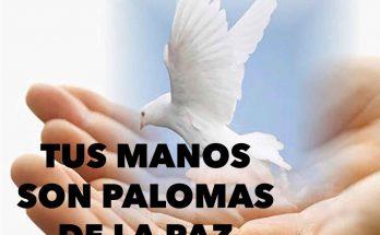 Tus manos son palomas de la paz