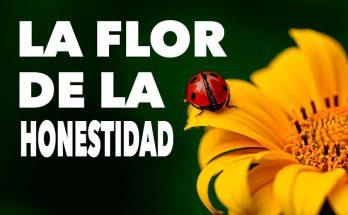 La flor de la honestidad