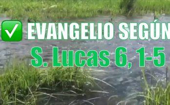 Evangelio según San Lucas 6,1-5.