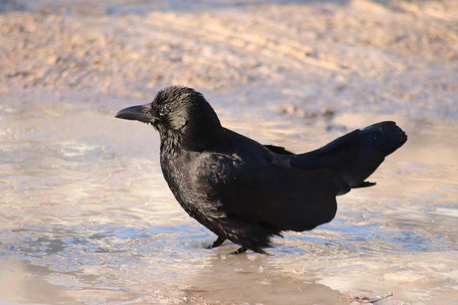 El pájaro y el pantano