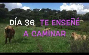 Camino de Cuaresma - Te enseñaré a caminar