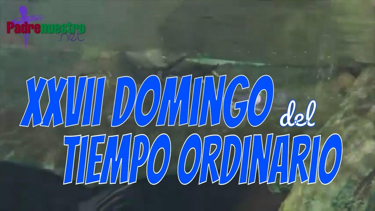 Video reflexión del Evangelio del Domingo XXVII Tiempo Ordinario - Ciclo A