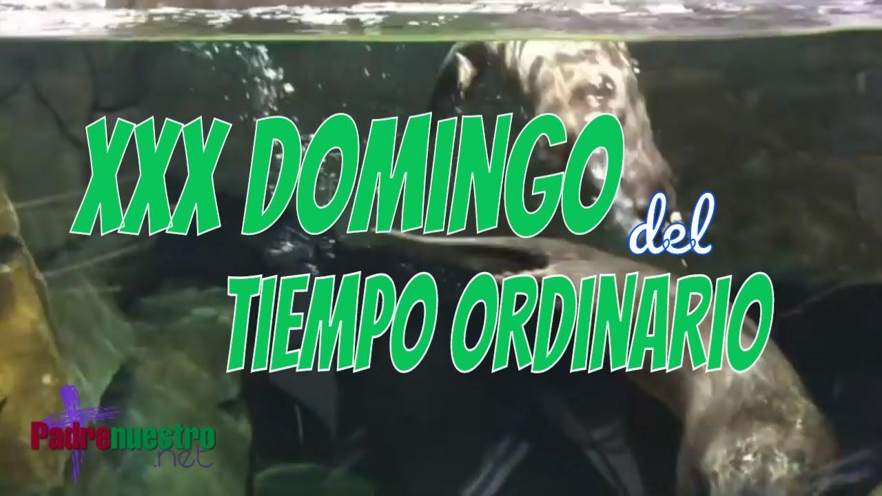 XXX Domingo del Tiempo ordinario - Ciclo A